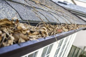 autumn maintenance gutters