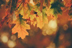 autumn maintenance waterproofing